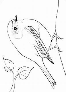 Malvorlage Vogel Spatz Heimische V 246 Gel Archive Naturstrolche