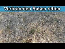 Rasen Verbrannt Und Vertrocknet Was Tun Erholt Sich