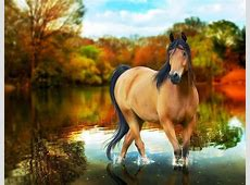 HD wallpapers desktop horse free   beautiful desktop