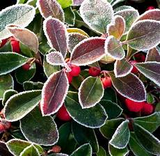 herbstblumen balkon winterhart pflanzen die besten balkonpflanzen f 252 r den herbst welt