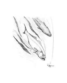 Ausmalbilder Fische Hecht Ausmalbilder Fische Malvorlagen Kostenlos Zum Ausdrucken