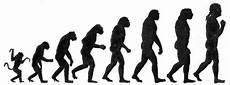 die evolution des menschen hominisation