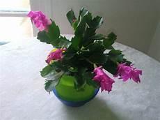 La Plante Grasse Fleur Fleuriste Bulldo
