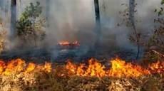 35 Terbaik Untuk Gambar Ilustrasi Tentang Kebakaran Hutan