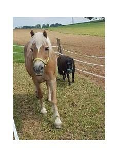 ponys zu verschenken pony zu verschenken tiermarkt tiere kaufen quoka de