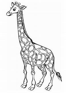 Malvorlagen Giraffen Gratis Giraffe Als Malvorlage Malvorlagen Tiere Giraffen