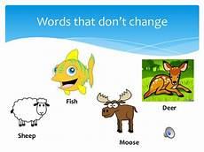 grammar lesson irregular nouns plural sokol