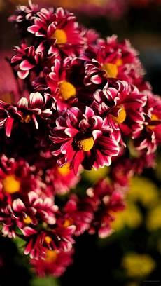 free flower wallpaper for phone beautiful wallpapers for mobile phone 49 images