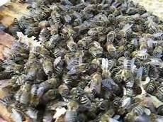 was machen die bienen im winter