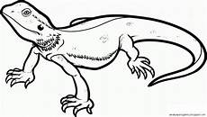 lizard drawing template wallpapers gallery