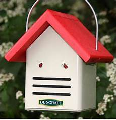ladybug house plans gorgeous ladybug habitats for your garden designs