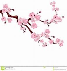 fleur de cerisier dessin des sports dessin fleurs de cerisier japonais dessiner