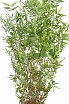 bambou d intérieur bambou artificiel 11 cannes fines plante d