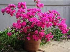 quoi planter ou semer pour fleurir rapidement un jardin au