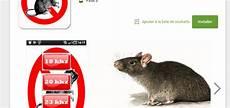comment faire fuir les souris dans les murs comment faire fuir les souris dans les murs taupier sur