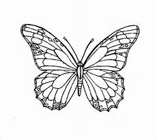 butterfly outlines for tracing david simchi levi