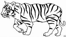 tiger laeuft ausmalbild malvorlage tiere