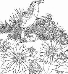 free printable sunflower coloring pages for
