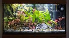 Dekoration F 252 R Dein Aquarium My Fish Aus Freude An Der