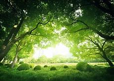 Tree Photography Backdrop 7x5ft green forest tree photo background