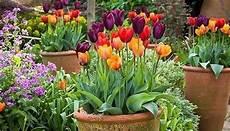 fiori in terrazzo fiori da terrazzo piante da terrazzo come scegliere i