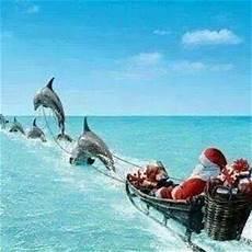 florida christmas greetings