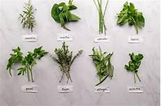 conserver herbes aromatiques comment conserver les herbes aromatiques