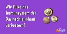 Pilze Im Darm - wie pilze das immunsystem der darmschleimhaut verbessern
