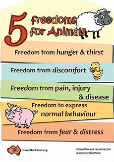 animal rights worksheets 14022 5 freedoms for animals poster classroom posters animals classroom posters and