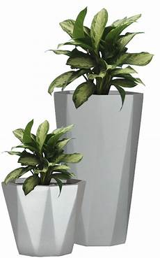 Industrial Home With Interior Planting And Transparent Walls pattern garden planter small flower pot