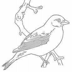 Robin Malvorlagen Lyrics Robins Coloring Pages Coloring Rocks With Images