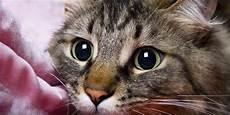 Unik Begini Keadaan Dunia Dari Penglihatan Seekor Kucing