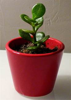 La Verte Multiplier Les Succulentes Bouturer Des