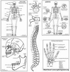 human skeletal system diagram labeled skeletal system labeling bundle high school college downloadable only