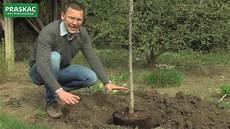 Obstbäume Pflanzen Wann - favorit welchen baum pflanzen dz51 casaramonaacademy