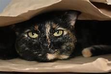 gatito lindo dentro de la caja de regalo foto de archivo de adentro 47815304