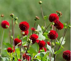 blumen rot foto bild rot natur bokeh bilder auf