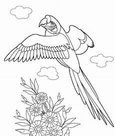 malvorlagen zum drucken ausmalbild papagei kostenlos 2