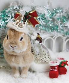merry christmas rabbit images santa bunny bunny pictures merry christmas cat christmas animals