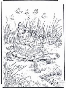 tortue avec des elfes zoo