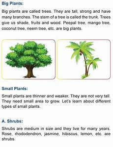 plant kingdom worksheets for grade 2 13758 grade 1 science lesson 2 the plant kingdom primary science
