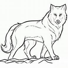 bildergebnis f 252 r malvorlagen wolf gratis wolf zeichnung