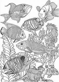 Ausmalbilder Erwachsene Fische Pin Auf Mandalas