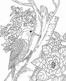 coloring pages of nature and animals 16380 backyard animals and nature coloring books free coloring pages animal coloring pages bird