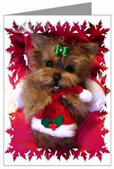 yorkie with christmas quotes quotesgram