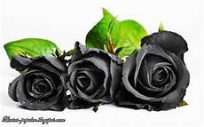 Bunga Mawar Hitam Putih Clipart Best