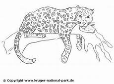 jaguar ausmalbilder raubkatzen