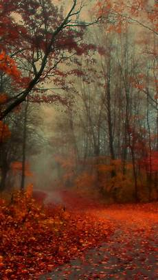 Iphone 11 Pro Autumn Wallpaper awesome autumn wallpapers for your iphone hd the nology