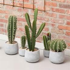 Cact 233 E Cactus Artificiel En Pot Ciment 42cm Pomax Drawer