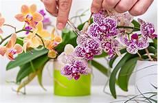 orchideen 10 tipps zur pflege r 252 ben